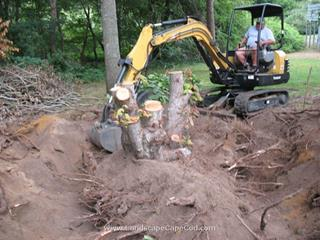 Back Yard Stump Removal